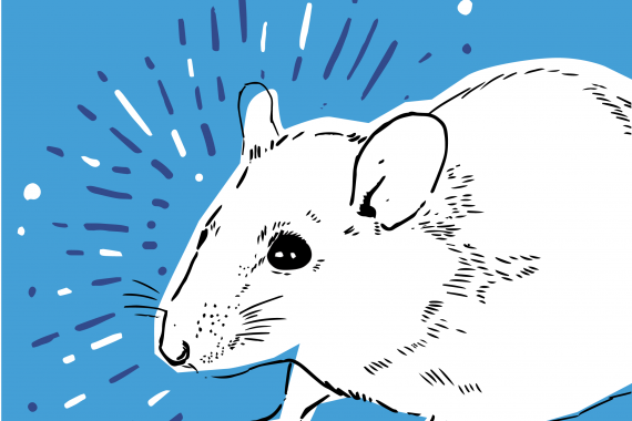 Introducing the most-unlikely public health hero ever: giant rats