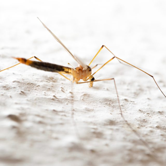 5 important lessons I learned from getting malaria