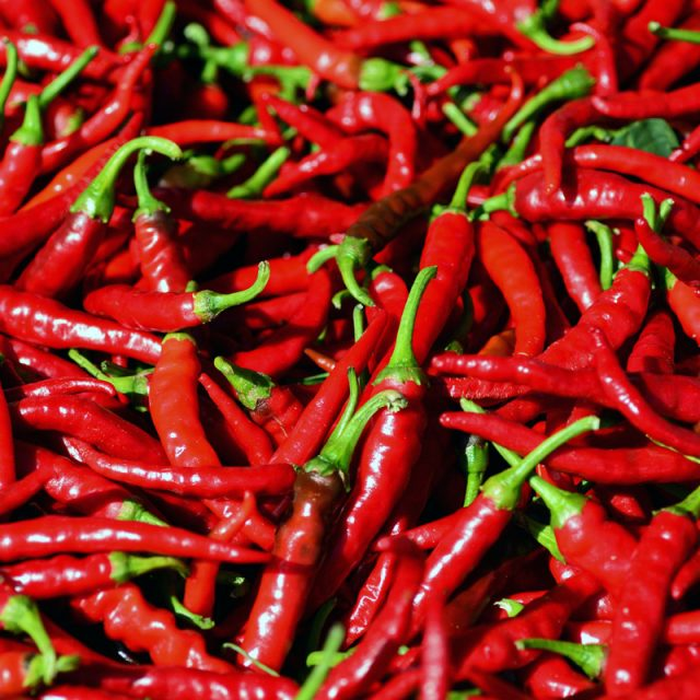 Kenya's herders fire up a hot new crop: chilli peppers