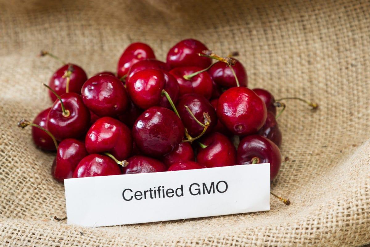 GMO Myths