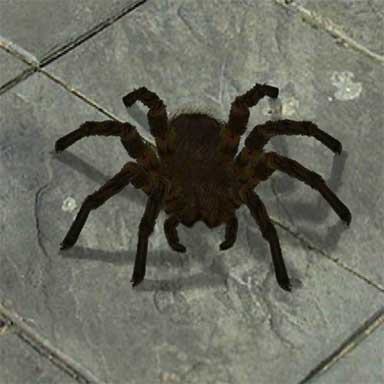 Scary Spider Game