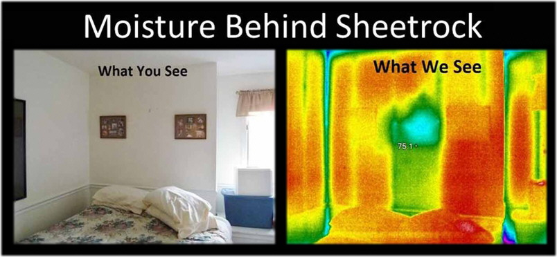 Infrared Thermography – Cranbrook Pest Control