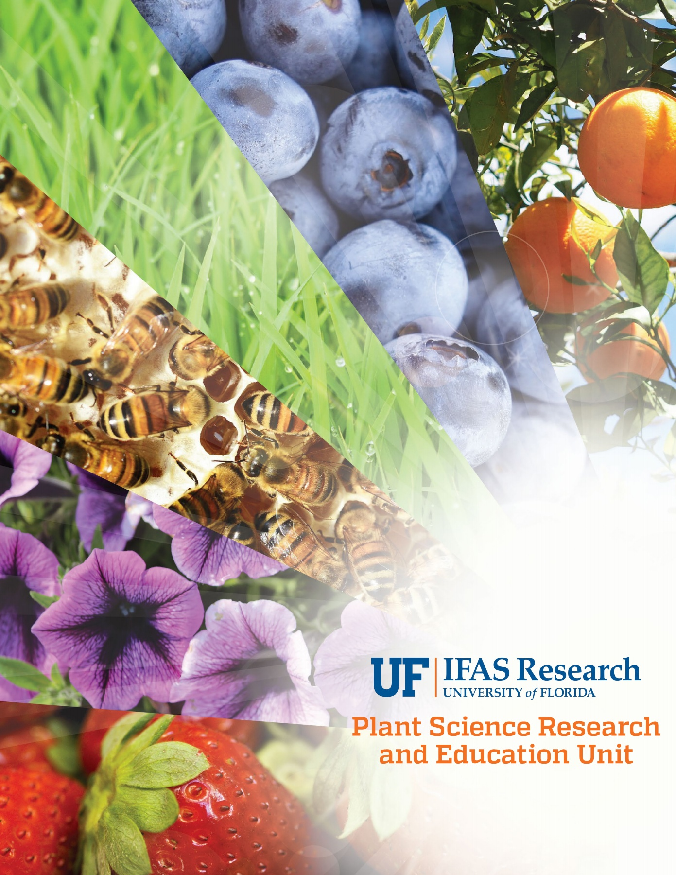 Psreu University Of Florida Institute Of Food And Agricultural