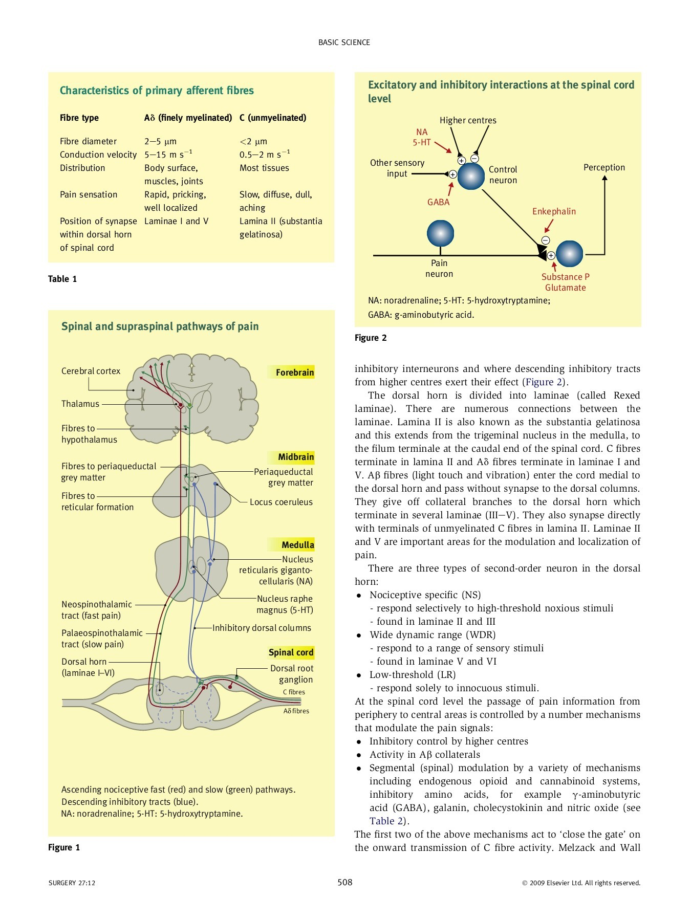 The anatomy and physiology of pain - UESC | FlipHTML5