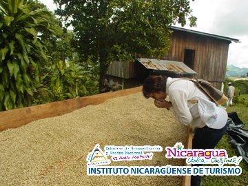MATAGALPA, COFFEE FLAVOR TOWN