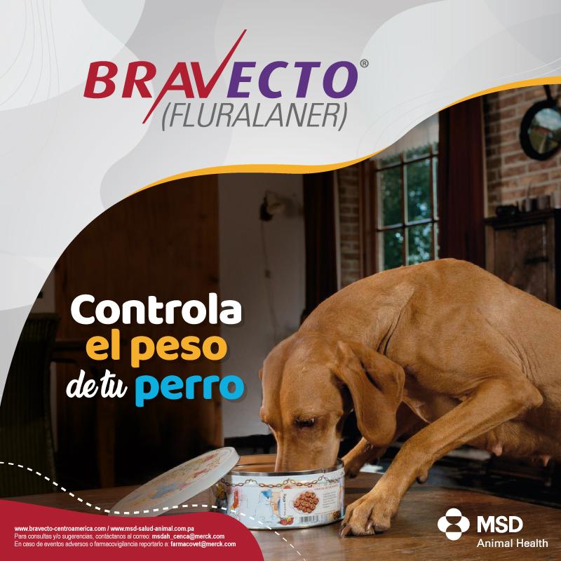 Controla el peso de tu perro