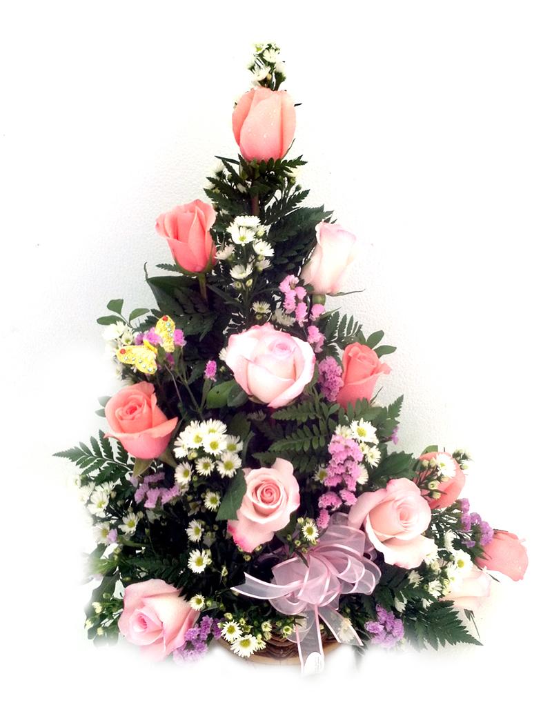 12 Rosas variado