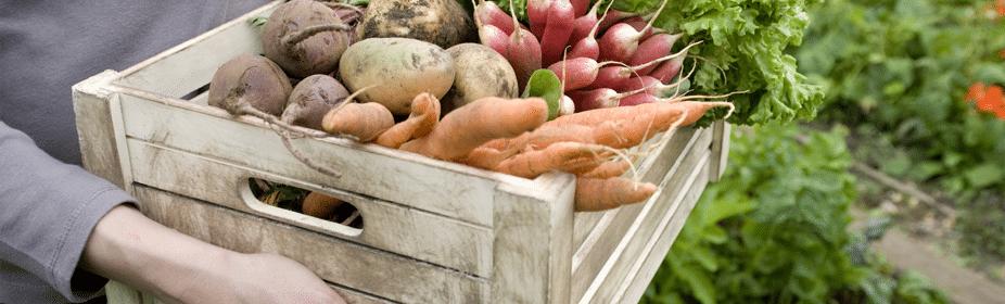 Organic Food: Healthy or Hoax?