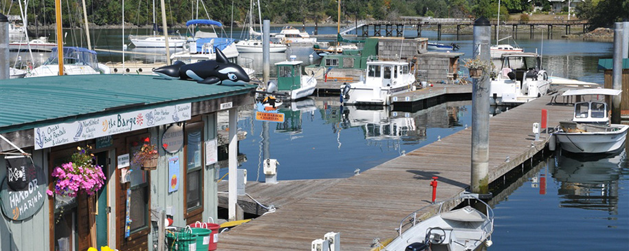 Take a whale watch tour from Deer Harbor Marina