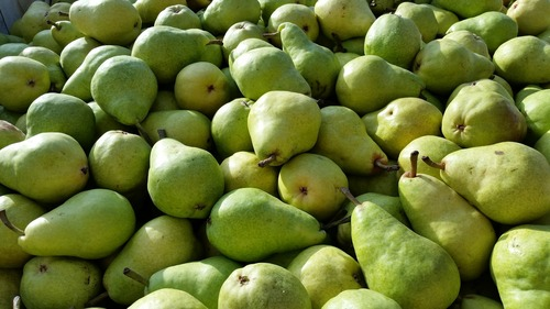 green bartlett pear