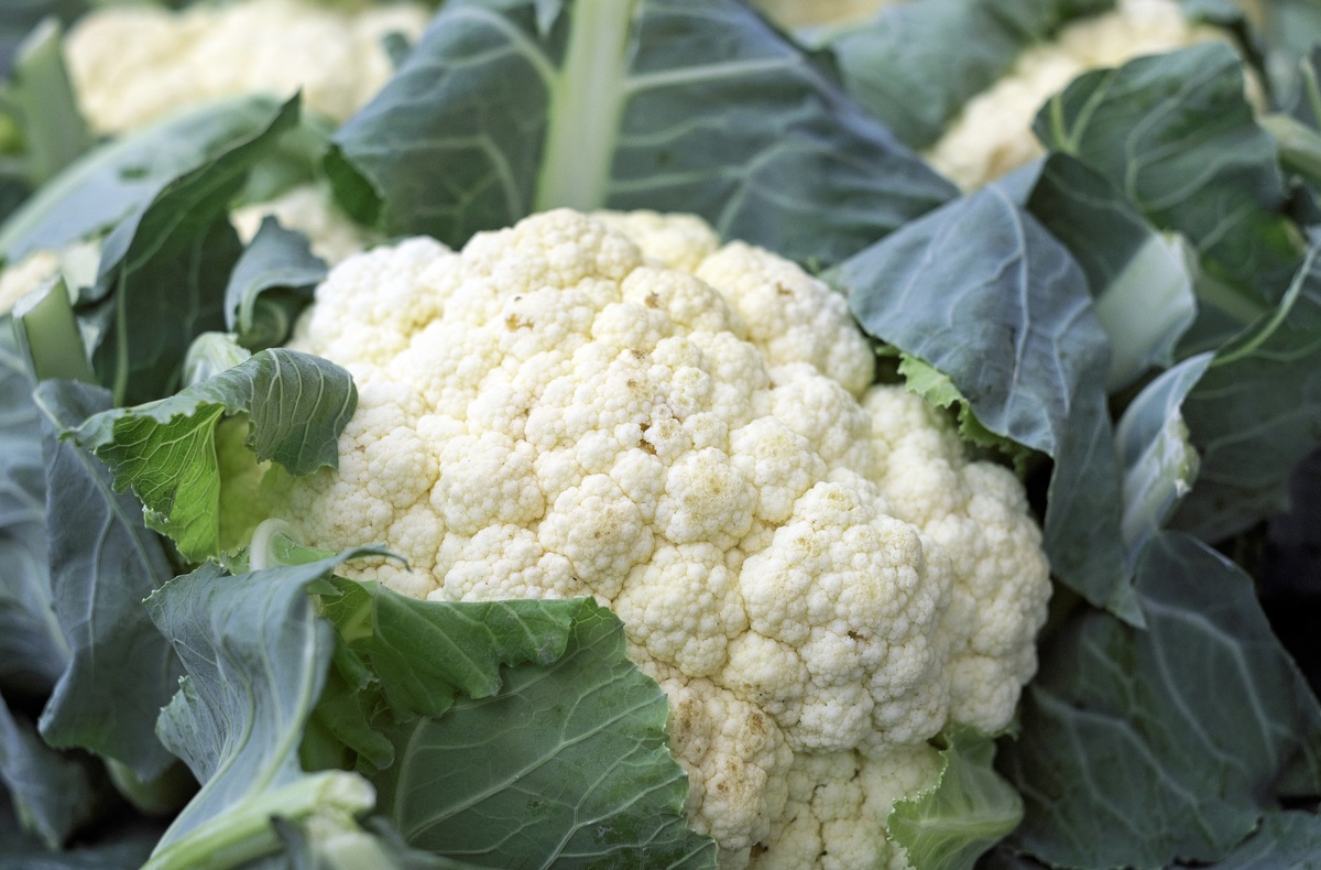 cauliflower planting in Garden  by ybvb