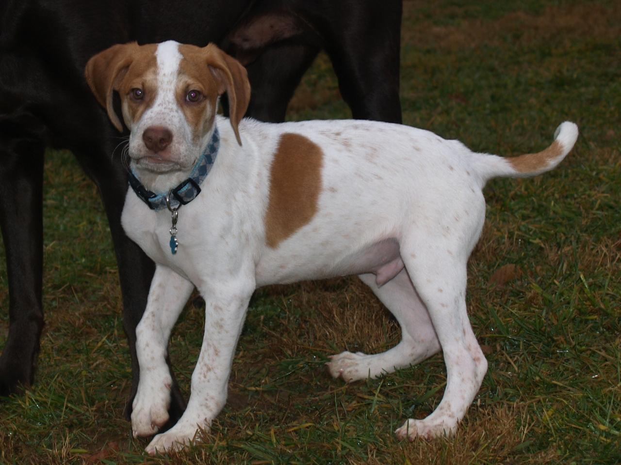 operation paws for homes hank lemon hound