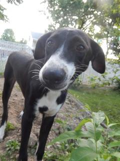 Rescue Dog Gobi  Legs