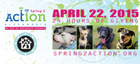 Spring2action_website_header