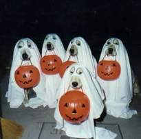 I_1156_dogs-costumes
