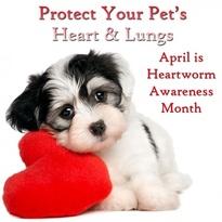 Aprilheartwormmonth