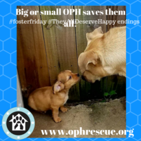 Big or small oph saves them all!