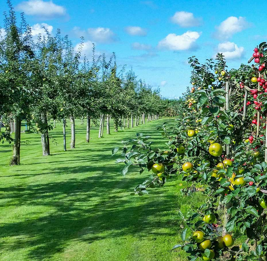 Tipos De Abono Para Frutales Blog De Agricultura Profesional ~ Cuando Hay Que Abonar Los Arboles Frutales