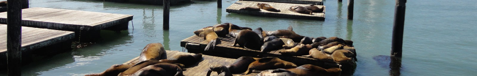 Sea lions in sunlight at San Francisco's Fisherman's Wharf