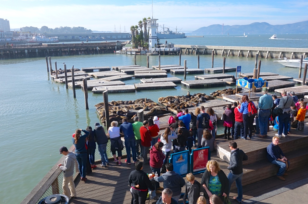 Sea Lion Viewpoint at Pier 39