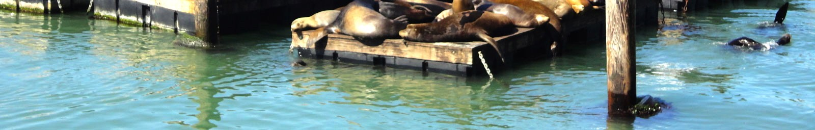 Sea lions resting on the dock at Fisherman's Wharf.