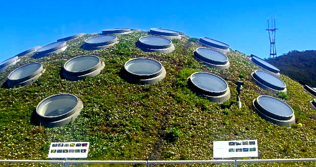 California Academy of Sciences living roof, San Francisco.