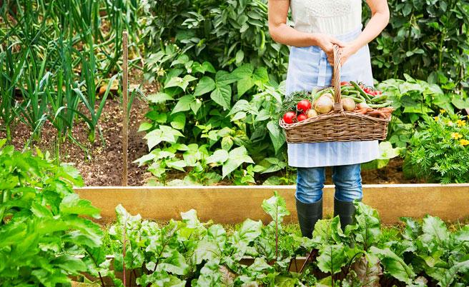 Easy Organic Gardening Tips