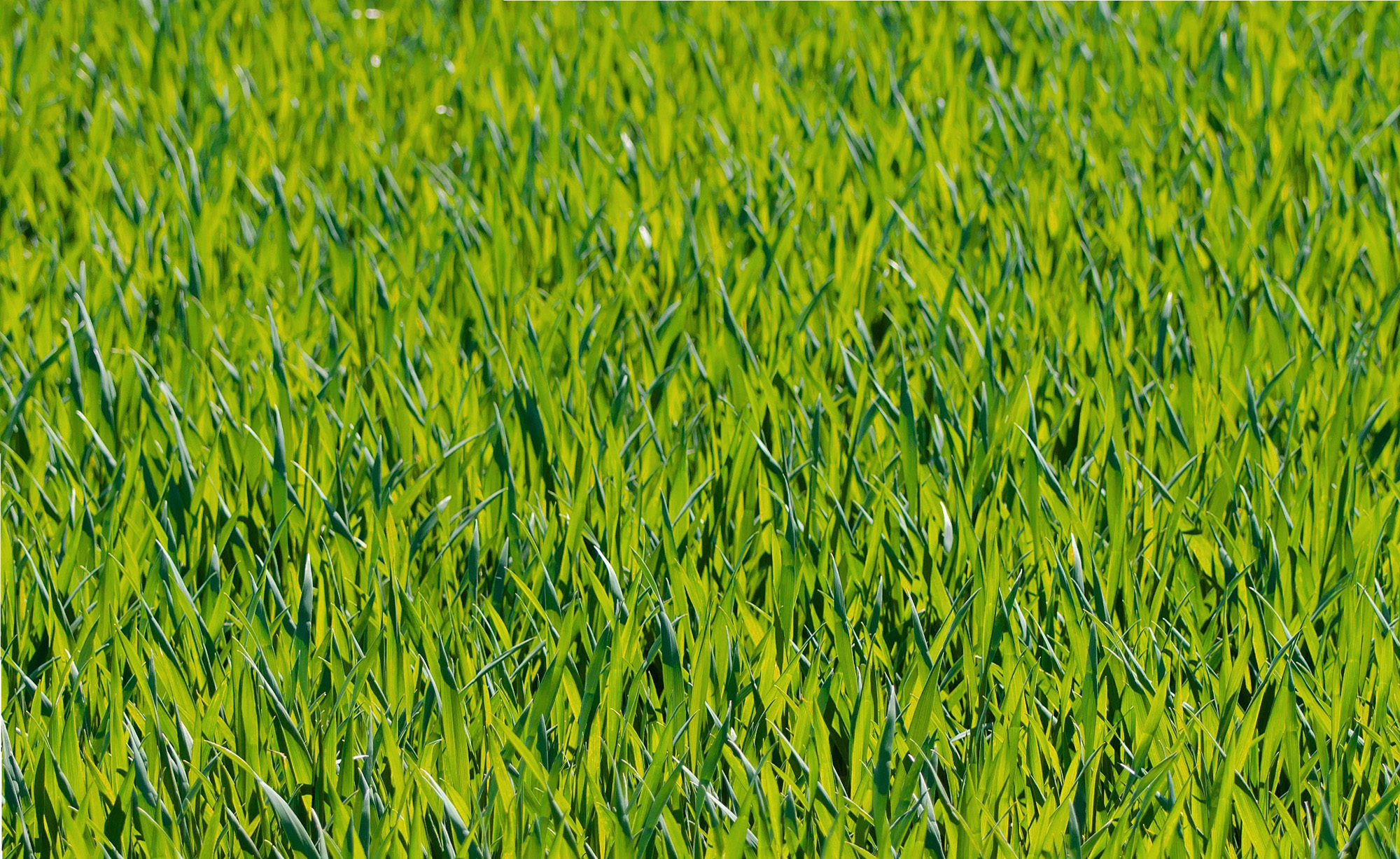 Grass cover crop.jpg