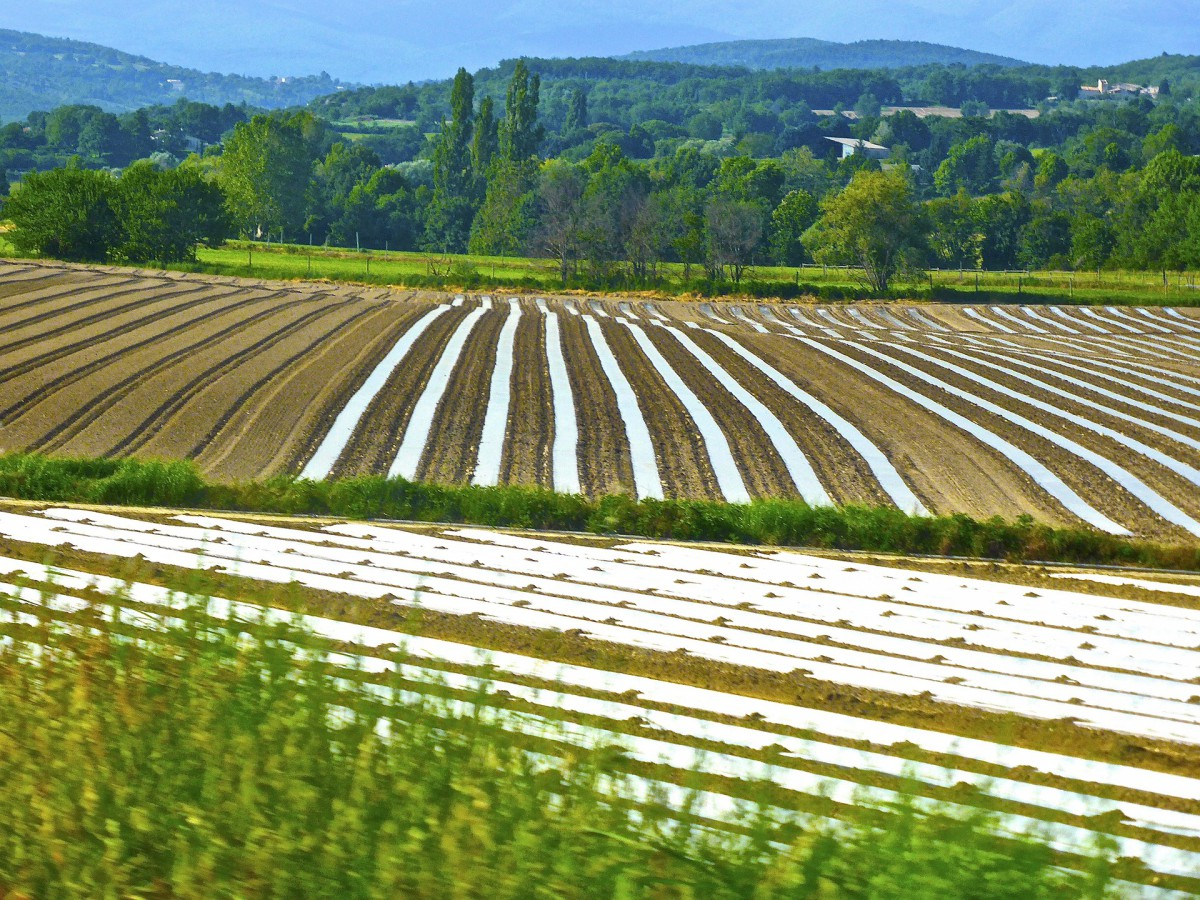 How can organic farming compete with conventional farming?