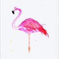 FlamingoBull