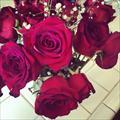 rosebby7