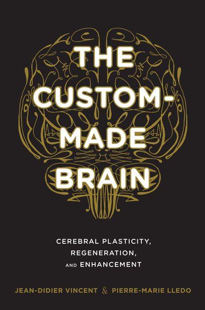 The Custom-Made Brain