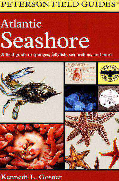 Buy Atlantic Seashore at Amazon
