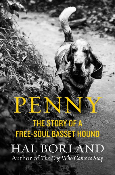 Buy Penny at Amazon