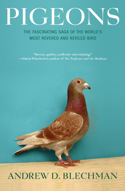 Buy Pigeons at Amazon