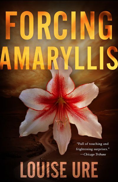 Buy Forcing Amaryllis at Amazon