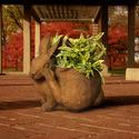 Bunny Pot Scratching