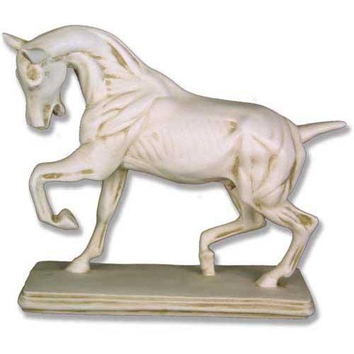 Anatomy Of Horse