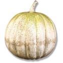 Pumpkin 24