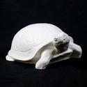 Sand Turtle 10