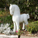 Arabian Horse 27