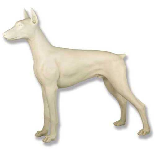 Standing Doberman Dog 32