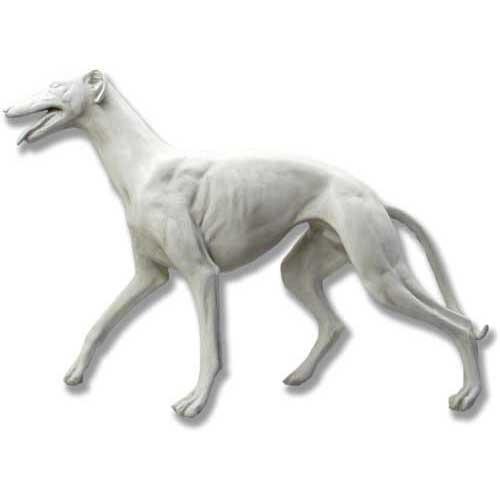 Greyhound 34