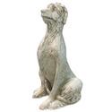 Irish Wolfhound 49