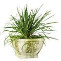 Fleur De Lis Pot-Square 10 H