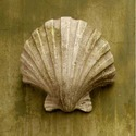 Napoli Shell Sconce 12 H