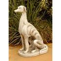 Italian Grayhound 20