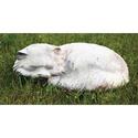 Fat Cat 11 W