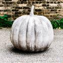 Pumpkin 21