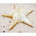 Starfish Pacific WALL 11